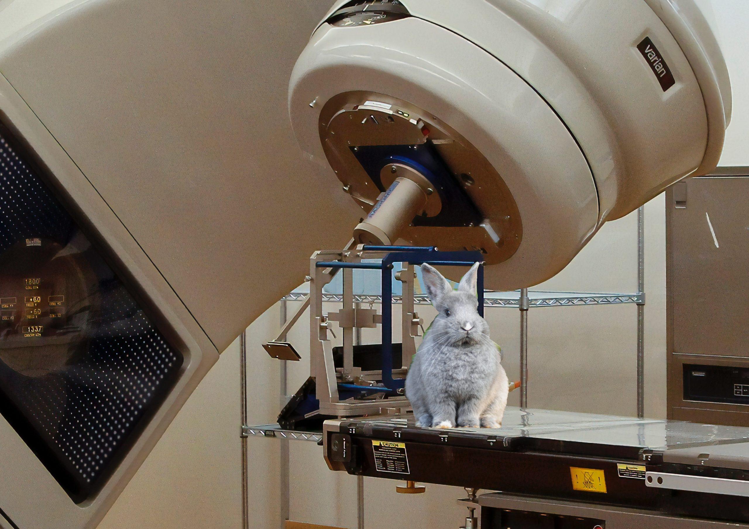 Photos by National Cancer Institute/Janan Lagerwall on Unsplash (Bearbeitung: PR hoch drei GmbH)